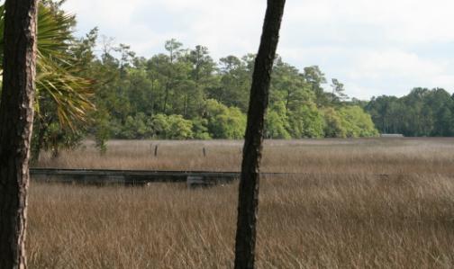 #8 marsh view