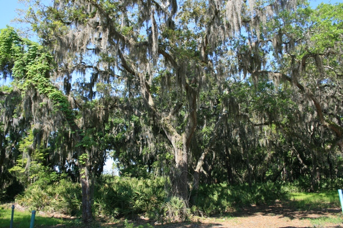 Moss oak