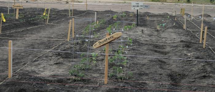7 garden plots