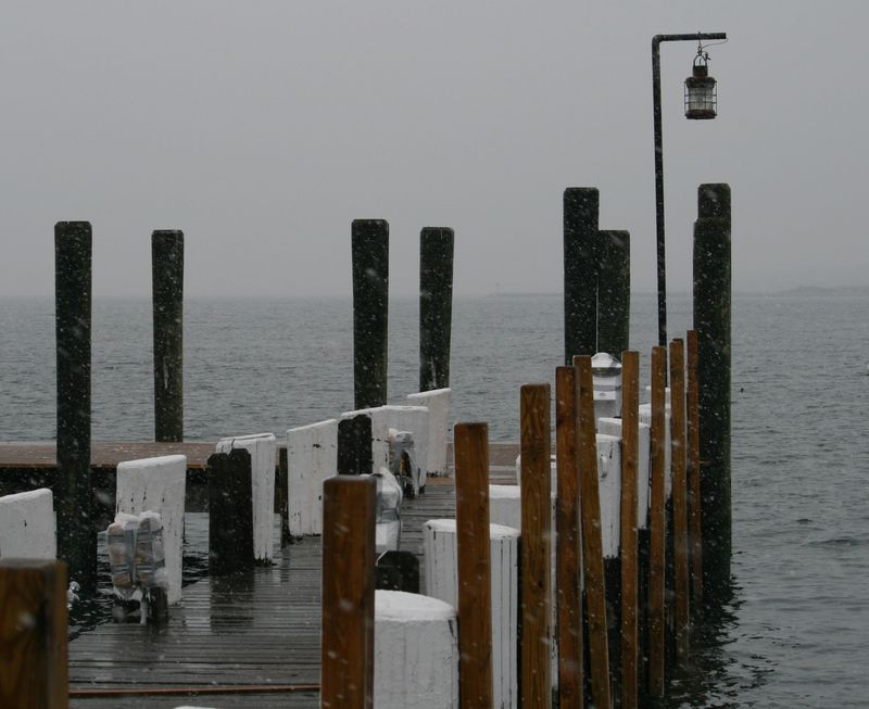 Snowy Harbor3