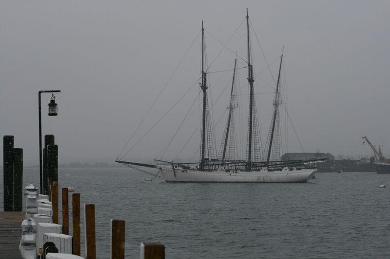 Snowy Harbor17
