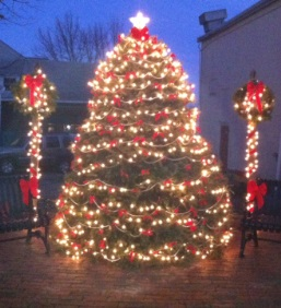 Vineyard haven street tree