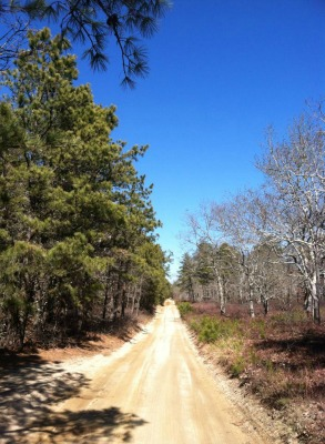5 Great Hiking Trails on Martha's Vineyard for Fall & Winter